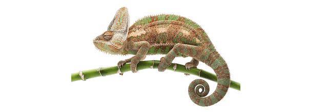 Chameleon-640x220c